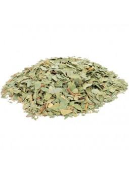 Feuilles d'eucalyptus séchées pour infusion