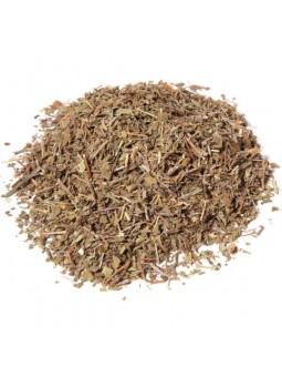 Tulsi indien herbe sacrée