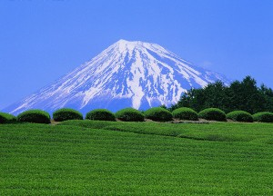champ de the vert au pied du fujiyama